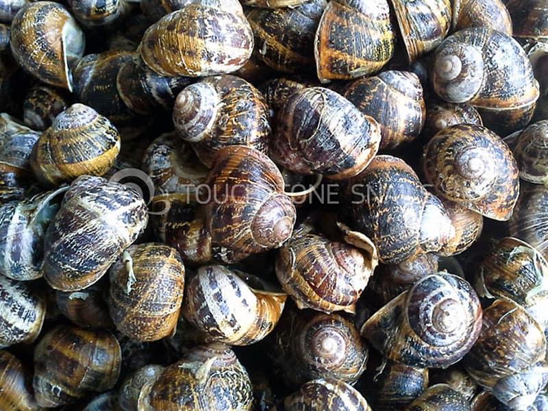 Snail Trade